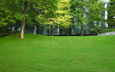 Professional Turf Laying in Hale Barns for a Beautiful Lawn